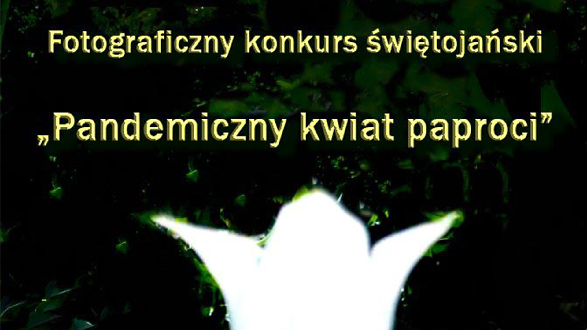 konkurs pandemiczny kwiat paproci